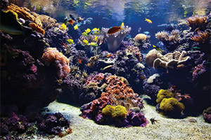 Pacific-Coral-Reef--Cam-(USA)
