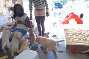 Eukanuba-&-Canine-Companions-for-Independence-(USA)