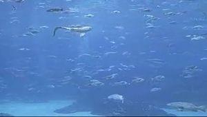 Georgia Aquarium Cam (USA)