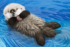 Sea-Otter-Cam-(USA)