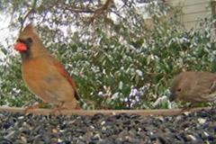 Wild-Bird-Cam-(USA)